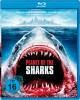 Planeta rekinów