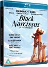 Czarny narcyz