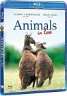 Zakochane zwierzęta
