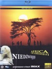 Afryka (Serengeti) / Niedźwiedzie