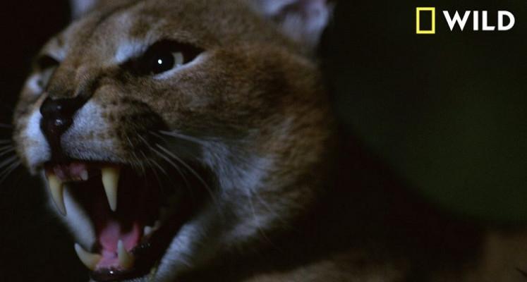 Dead by Dawn - dokument w klimatach horroru od twórcy The Walking Dead