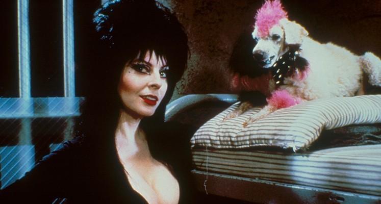 """""""Elvira, władczyni ciemności"""" w steelbooku Blu-ray – ruszył preorder"""